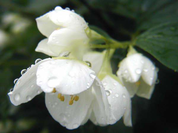flowers_02266